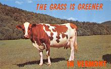 top005969 - Cow Post Card