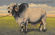 top005989 - Cow Post Card