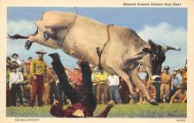 top005997 - Cow Post Card