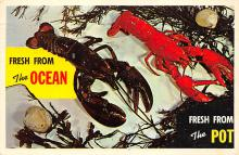 top006083 - Lobster Post Card