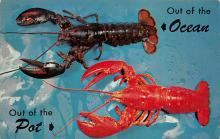 top006097 - Lobster Post Card