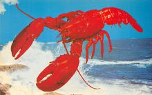 top006127 - Lobster Post Card