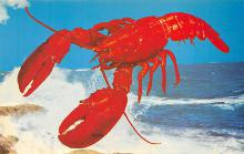 top006139 - Lobster Post Card
