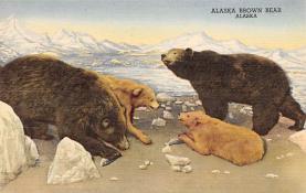 top006303 - Bear Post Card