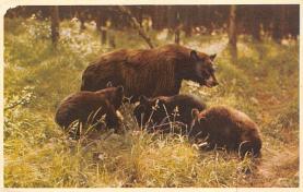 top006309 - Bear Post Card