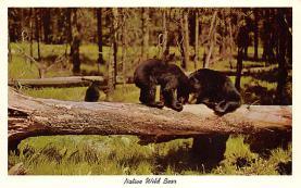 top006321 - Bear Post Card