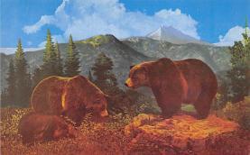 top006323 - Bear Post Card