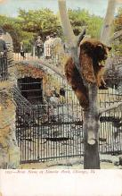top006327 - Bear Post Card