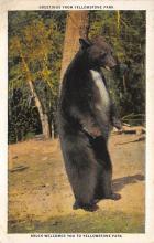 top006415 - Bear Post Card
