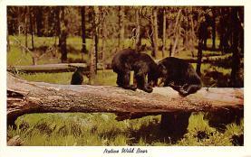 top006423 - Bear Post Card