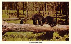 top006431 - Bear Post Card