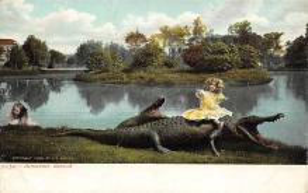 top006631 - Alligator Post Card