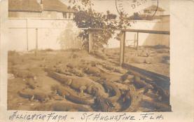 top006669 - Alligator Post Card