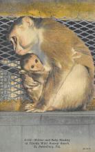 top006711 - Monkey Post Card