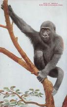 top006733 - Monkey Post Card