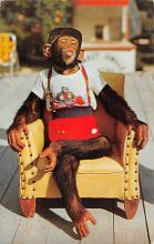 top006759 - Monkey Post Card