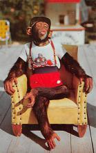 top006771 - Monkey Post Card