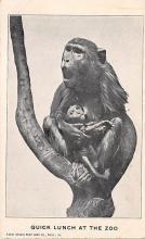 top006773 - Monkey Post Card