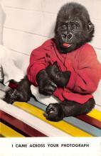 top006775 - Monkey Post Card