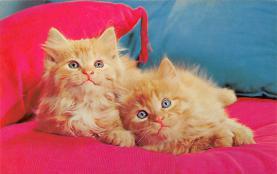 top006791 - Cat Post Card, Cats Postcards