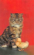 top006793 - Cat Post Card, Cats Postcards