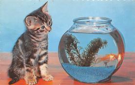 top006803 - Cat Post Card, Cats Postcards