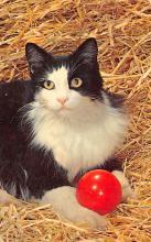 top006805 - Cat Post Card, Cats Postcards