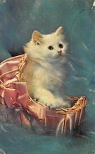 top006809 - Cat Post Card, Cats Postcards