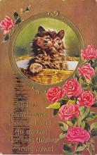 top006813 - Cat Post Card, Cats Postcards