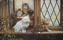 top006817 - Cat Post Card, Cats Postcards