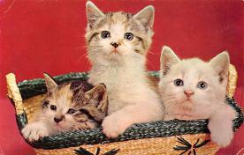 top006819 - Cat Post Card, Cats Postcards
