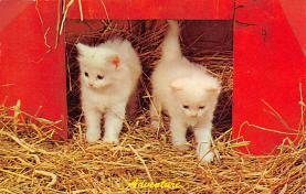 top006827 - Cat Post Card, Cats Postcards
