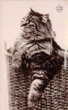 top006839 - Cat Post Card, Cats Postcards