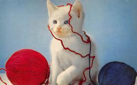 top006849 - Cat Post Card, Cats Postcards