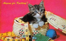 top006851 - Cat Post Card, Cats Postcards