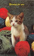top006853 - Cat Post Card, Cats Postcards