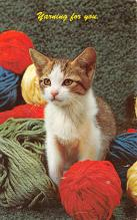 top006855 - Cat Post Card, Cats Postcards