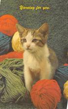 top006859 - Cat Post Card, Cats Postcards