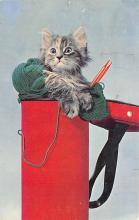 top006863 - Cat Post Card, Cats Postcards