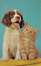 top006865 - Cat Post Card, Cats Postcards