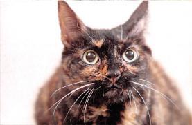 top006867 - Cat Post Card, Cats Postcards