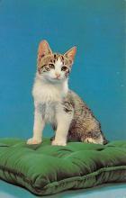 top006869 - Cat Post Card, Cats Postcards