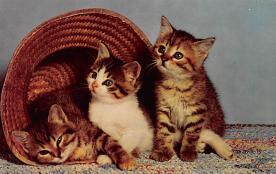top006871 - Cat Post Card, Cats Postcards