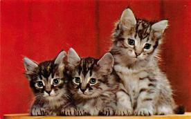 top006873 - Cat Post Card, Cats Postcards