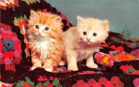 top006877 - Cat Post Card, Cats Postcards