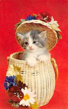 top006879 - Cat Post Card, Cats Postcards