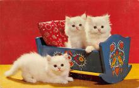 top006881 - Cat Post Card, Cats Postcards