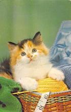 top006883 - Cat Post Card, Cats Postcards