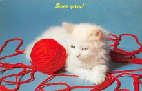 top006885 - Cat Post Card, Cats Postcards