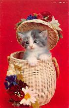 top006887 - Cat Post Card, Cats Postcards